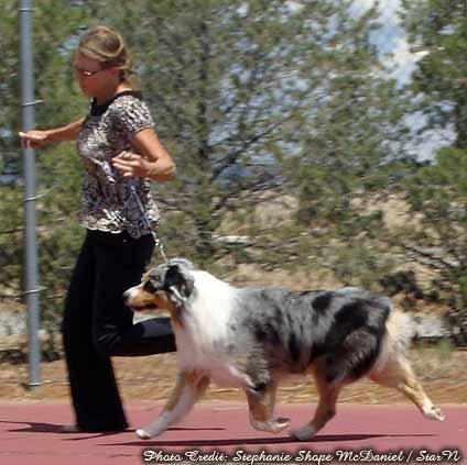 Jailhouse Australian Shepherds