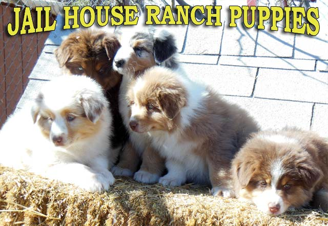 Jailhouse Ranch Puppies
